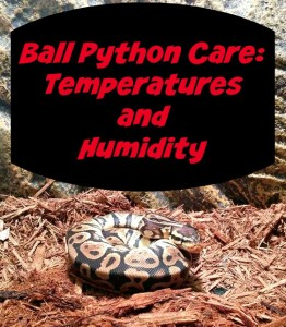 Ball Python Care: Temperatures and Humidity